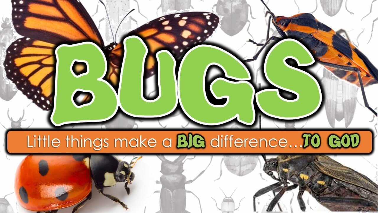 Sunday Study: Bugs